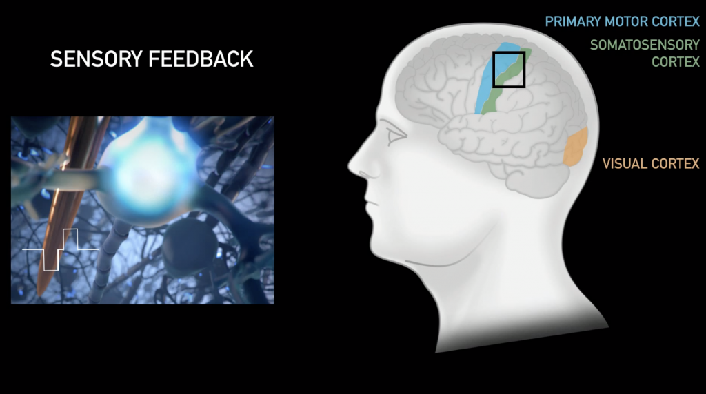 Sensory feedback - Perhaps even able to restore sight